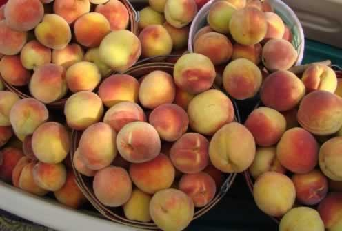 Perfect East Texas hand-picked peaches, fresh off the tree