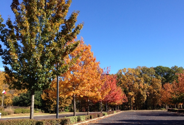 Fall colors on the Hollytree Country Club in Tyler Texas
