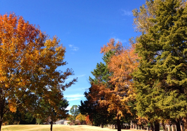 Fall colors on the Hollytree Golf Course in Tyler Texas