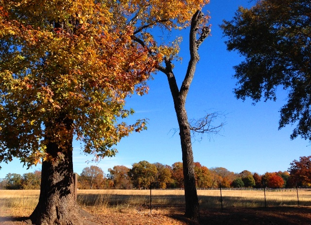 Fall foliage tours around tyler texas current fall foliage reports