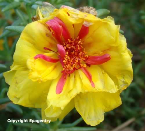 East Texas Flowers, Trees, Dogwoods, Daffodils, Wildflowers