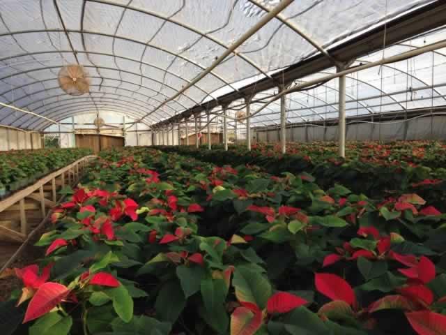 Tyler Texas Plant Nurseries Garden Centers Landscaping