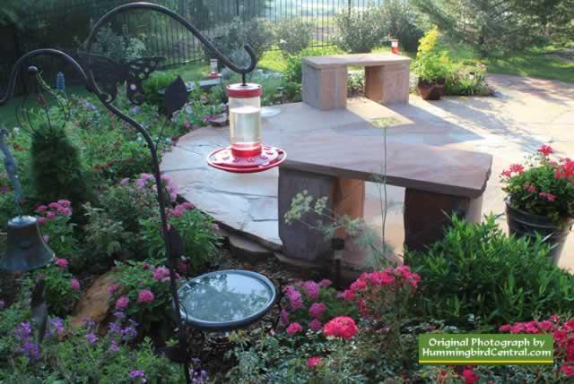 Texas Hummingbird Garden With Low Hanging Feeder