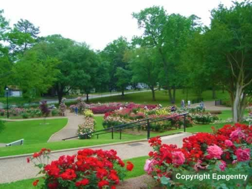 Roses In Garden: East Texas Botanical Gardens, Arboretums, Flower Trails
