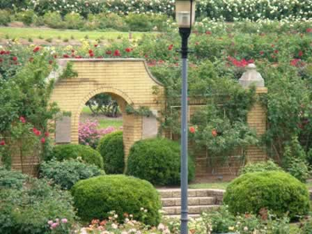 Arch way in the Tyler, Texas Rose Garden