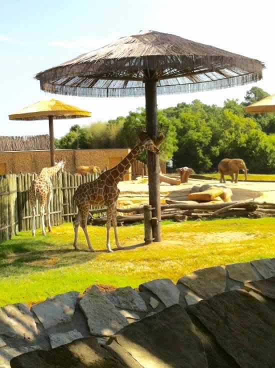 Giraffes and elepfants at the Caldwell Zoo