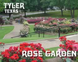 Tyler Texas Rose Garden ... the nation's largest municipal rose garden
